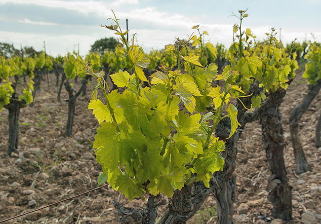 Verdifer Húmico SP